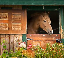 Beautiful Horse by Gisele Bedard