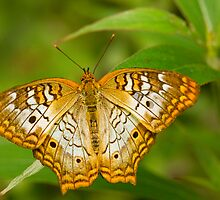Butterfly Comfortably Perched by Melissa Gurdus