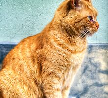 Stray Cat by oreundici
