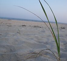 Dune Grass on the Beach by TJ Trubert