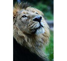 Ashok the Lion King Photographic Print