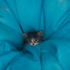 Becky as a Kitten by wheelyawheely