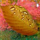 Tears of Autumn by Jan Cartwright