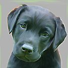 Black Labrador by Stephanie A Marks