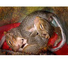 Squirrel Snuggles Photographic Print