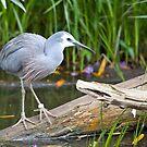 Bird at Serendip by James Troi