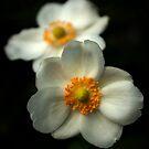 Inner beauty by steppeland