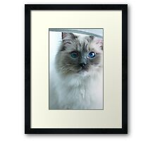Savannah and her Light Box Framed Print