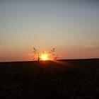 Last solar kiss on my plain... by Ana Belaj