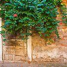 Door with Vine by Christine Wilson