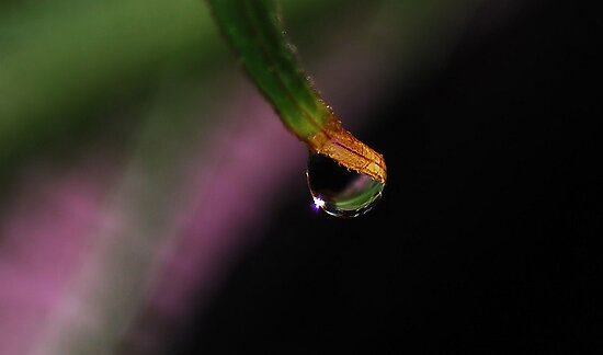 One Drop by Elaine  Manley