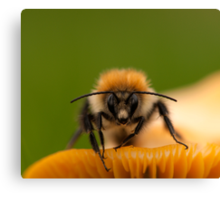 Bee on a Toadstool II Canvas Print
