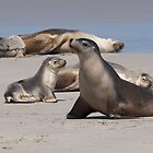 Sea Lions by Werner Padarin
