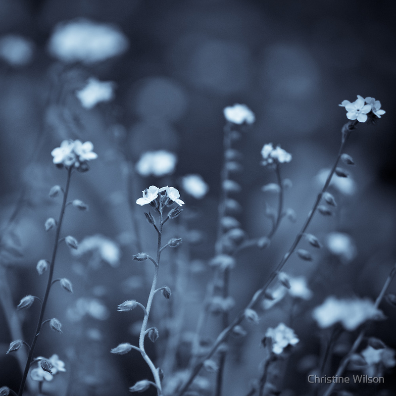 Dreaming  by Christine  Wilson Photography