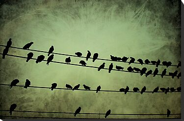 BIRDS ON A WIRE by manumint