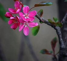 Gratitude is the fairest blossom which springs from the soul. -Henry Ward Beecher  by Bernard (Ben)  Bosmans
