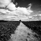 It all ends with a tree by Charlie Trotman