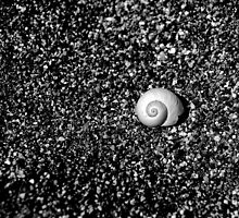 Sea shell on the seashore by Mitch ( Michelle) McFarlane