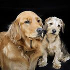 Golden Retriever and Dachshund Puppy - a sweet couple by Christine Till  @    CT-Graphics
