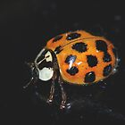 A Lady Bug in November... by Larry Llewellyn