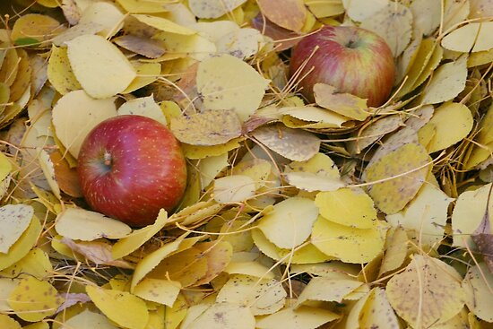 Two Apples in bright yellow leaves by PhotoCrazy6