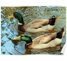 Duck pair Poster