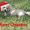 Our Pets and Christmas