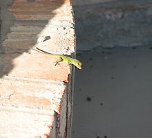 A Tiny Anole by JeffeeArt4u