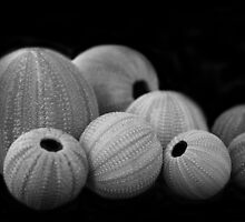 Sea Urchin by tracyleephoto