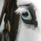 Equine Eye by Jo McGowan