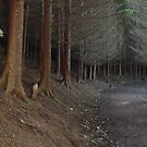 enter the black forest by leonie7