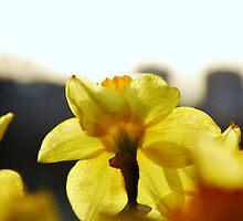 Yellow by DEJAN ALEKSOVSKI