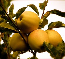 Golden Apples by Christian Langenegger
