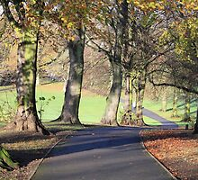 Chilly Autumn morning in Cotteridge  by davidc