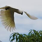 Sulphur-Crested Cockatoo by WantedImages