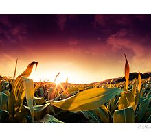 """""""Nuclear Sunset - Wig Wig, nr Much Wenlock by rharris-images"""