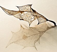 FRAGILE by Sandy Stewart