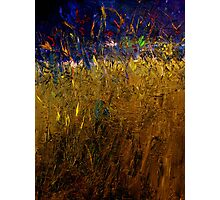 Blades Of Grass Photographic Print