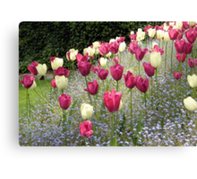 Tulips and Tulips Canvas Print