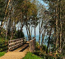Morning Walk ~ Lyme Regis by Susie Peek