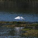 An Egret Fishing by Sharon Perrett