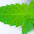 Mint leave micro by sanyi