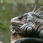 Lizard  by elphonline