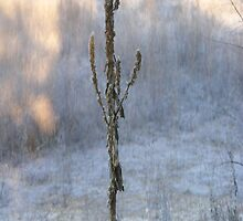 Winter Stalks by Michelle Hoffmann