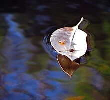 floating leaf by Zefira
