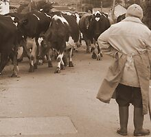 Waiting 'til the cows come home... by Justine Devereux-Old