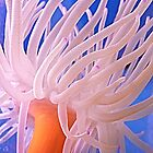 Sea Anemone not See An Enemy! © by jansnow