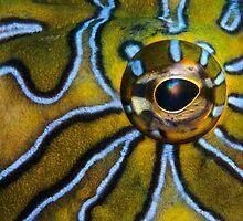 Eye-Liner by Norbert Probst