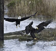 Pair of Eagles at Mealtime by David Friederich