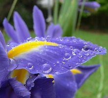 Summer Mornings Dew by melodyart